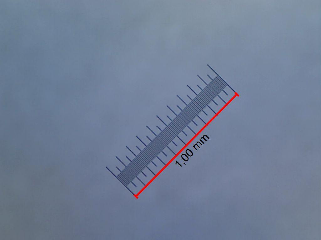 Снимок калибровочного слайда на увеличении 212 крат. Точные измерения